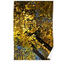 Golden Canopy - Look Up to the Trees and Enjoy Autumn - Vertical Right Poster