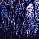 Dark Purple Forest by OneDayOneImage Photography