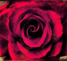 Vintage Red Rose by SRowe Art