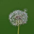 Dandelion Green by Declan Carr