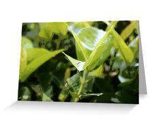 Lemon Lime Leaves Greeting Card