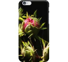 Apple Blossom Buds of the Pink-Pearl Apple Tree iPhone Case/Skin
