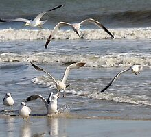 Seagull Time at the Beach by krishoupt