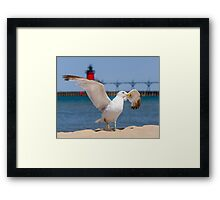 Flapping Gull And Lighthouse Framed Print