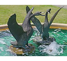 Two Swans in a Fountain Photographic Print