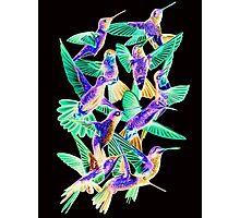 Hummingbird Dance in Sharpie (Inversion Edition) Photographic Print