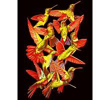 Hummingbird Dance in Sharpie (FireBird Edition) Photographic Print