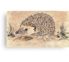Hedgie, the African Hedgehog Canvas Print