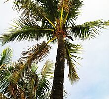 Palm Trees in Paradise by maddiemgilstrap