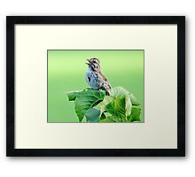 Sing A New Song Framed Print