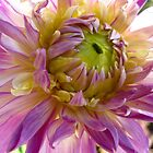 Sunshine and Dahlias by MarianBendeth