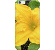 Wet Yellow Squash Flower iPhone Case/Skin