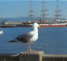 The Seagull(In The Style Of Renoir) by RobynLee