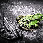FROG by PimpinellaArt