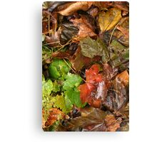 Wet Fall Leaves Canvas Print