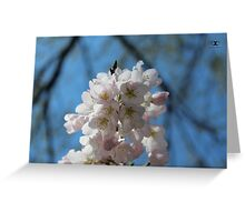 Cherry blossoms April 2014 Greeting Card