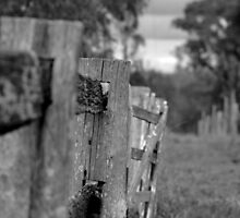 Along the Fence by Damian
