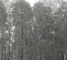 Snow, Mt Macedon by MIchelle Thompson