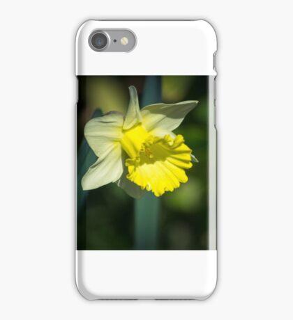 A Pretty little Daffodil iPhone Case/Skin