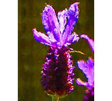 One Lavender Flower Photographic Print