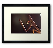 Death Comes Swiftly Framed Print