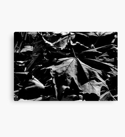 Shadows Lengthen Canvas Print