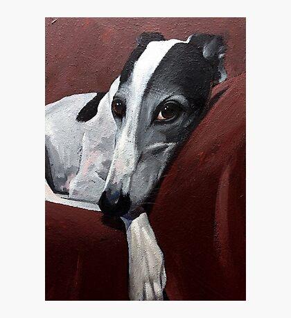 Greyhound.. Photographic Print