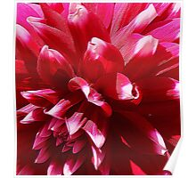 Flowers – 2 Poster