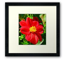Flowers – 3 Framed Print