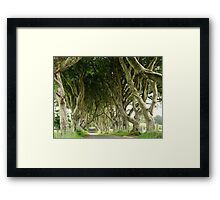 The Dark Hedges, Northern Ireland Framed Print
