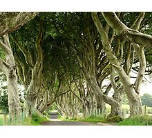 The Dark Hedges, Northern Ireland Photographic Print