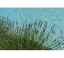 Summer Aromatherapy at the Fragrant Edge of the Swimming Pool Photographic Print