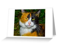Red-black-and-white cat Greeting Card