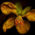 Yellow Drama by Dianne English