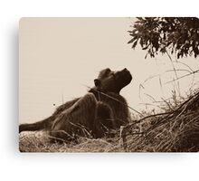 Monkey- Zambia Canvas Print