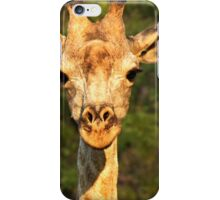 Giraffe-Zambia  iPhone Case/Skin