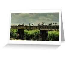 Seagulls on old jetty in Norfolk Greeting Card