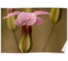 pink raindrops Poster