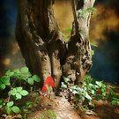A Woodland dream by Christine Lake