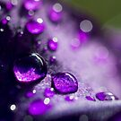 Iris Droplets by Laura Sykes