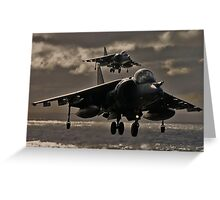 Hovering Harrier Greeting Card