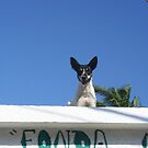 Dog on a Hot Tin Roof - Puerto Marquez, Mexico by Allen Lucas