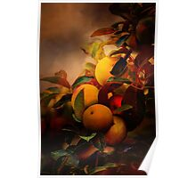 Apples in Fall - A Living Still Life Poster