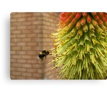 Hovering Bumble Bee Canvas Print