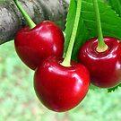 Ukrainian Cherries by Irina777