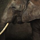 elephant by lucyliu