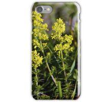 Galium Verum (Lady's Bedstraw), Inishmore, Aran Islands iPhone Case/Skin