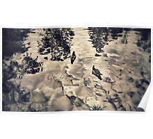 Ducks on pond Poster