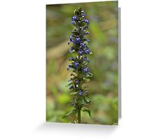 Bugleherb - Burntollet Woods Greeting Card