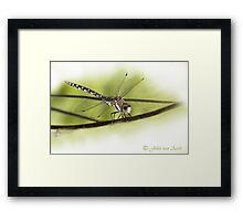 ...its a small World ..the 'libella /dragonfly'  Framed Print